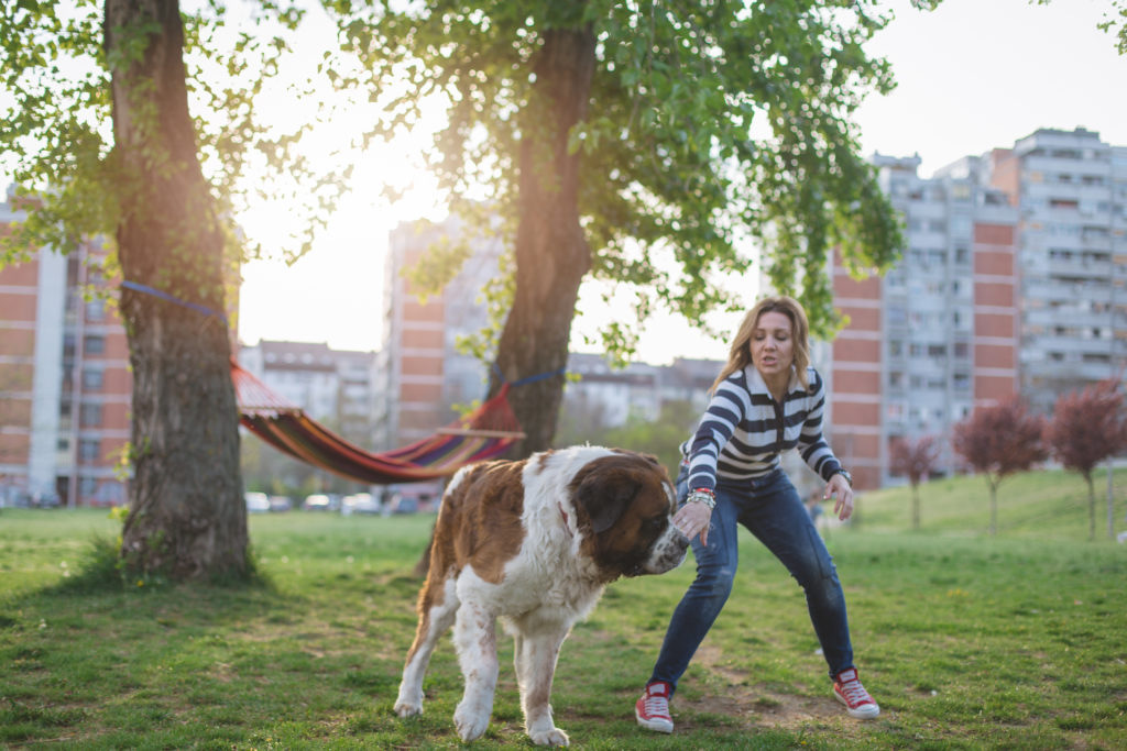 prevent animal attacks from dog in park